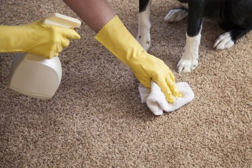 Pet Urine and Odour Removal